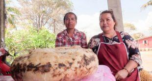 Wanita Ini Temukan Muntahan Ikan Paus Senilai Rp 3 Miliar Lebih